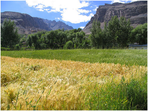Wakhan Valley Farms close-up